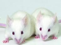 mice_195x145.jpg