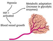 Blood vessel neogenesis