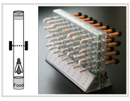 Tubes with infrared sensors track flies' sleep behavior
