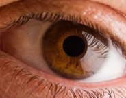 Eye Movement Rhythm Important to Eye-Tracking Diagnosis